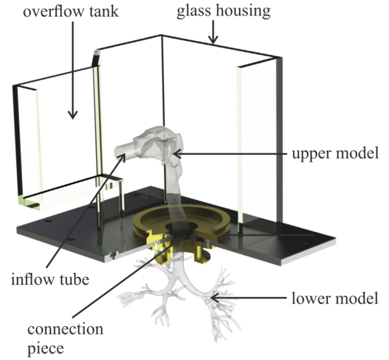 CAD rendering of the mounting construction for the transparent silicone model.