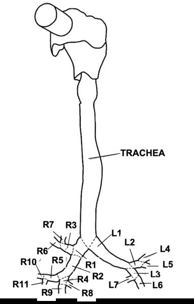 File:Scheme dimensions2.png